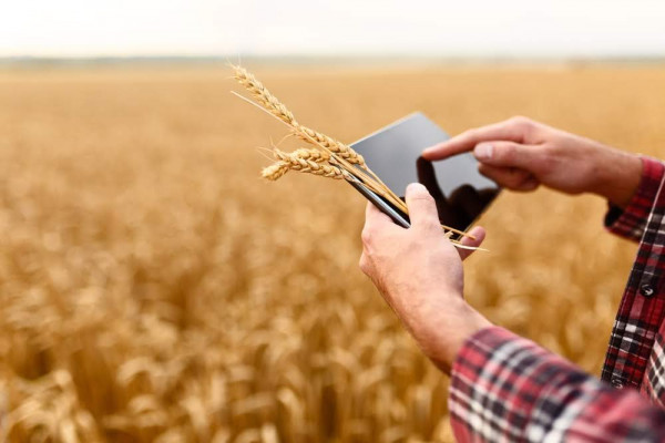 Land Digitalisierung Kommune Tablet Smart farming using modern technologies in agriculture. Man agronomist farmer with digital tablet computer in wheat field using apps and internet, selective focus